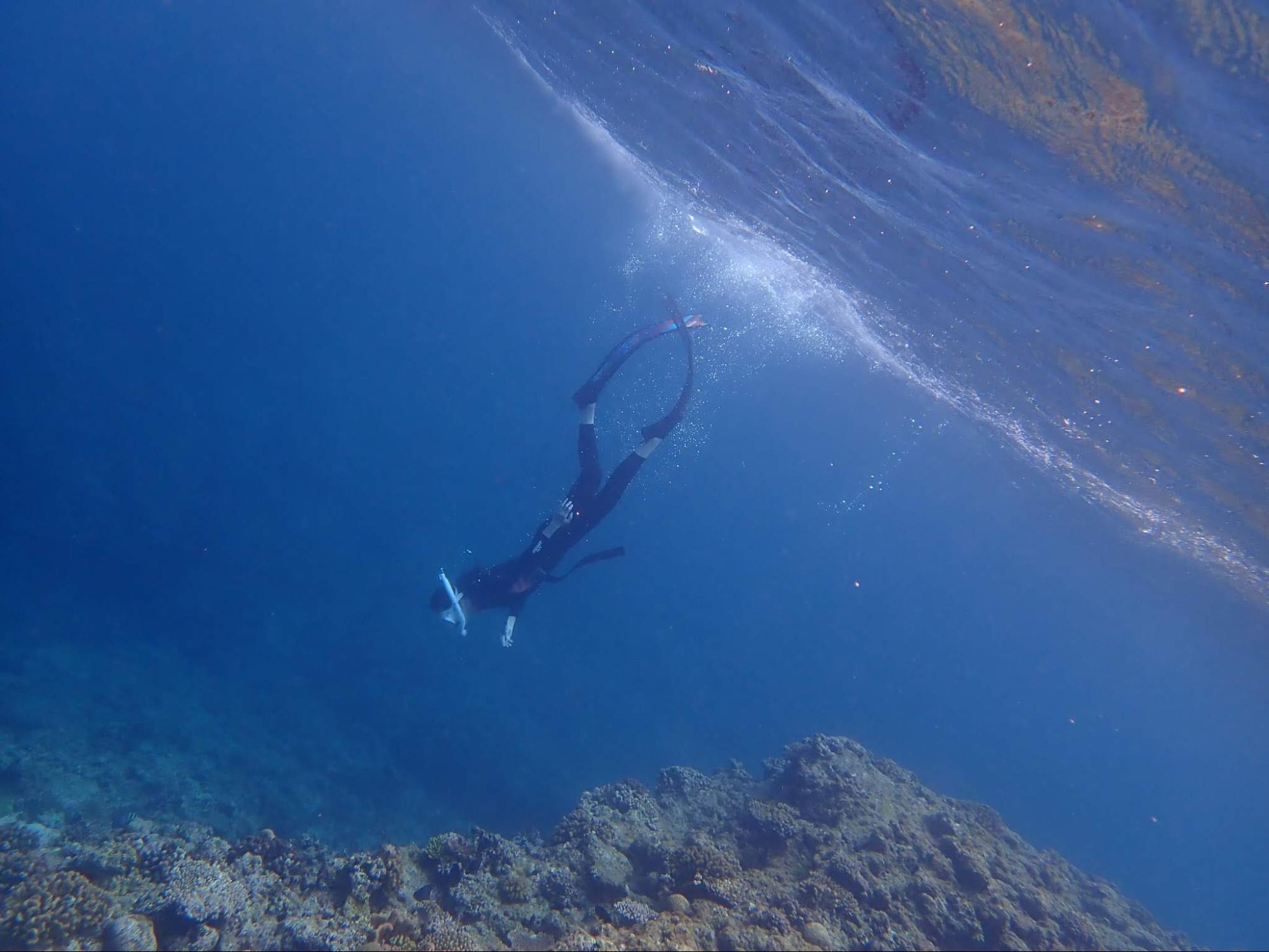 潜水する様子