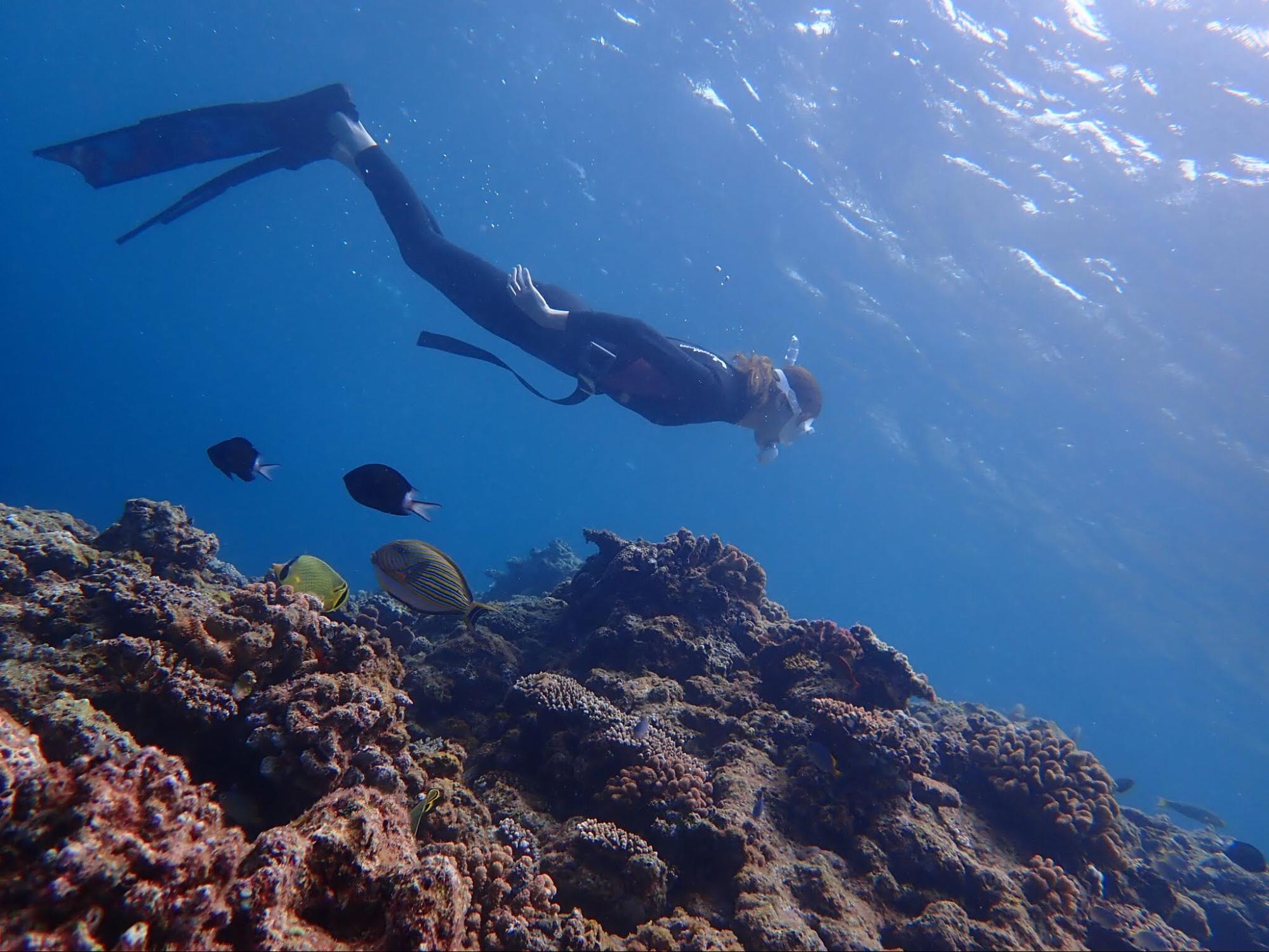 スキンダイビングの様子と海中の魚